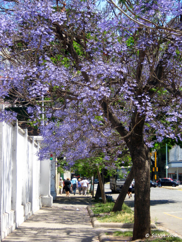 Jacarand 225 Cerca De Buenos Aires